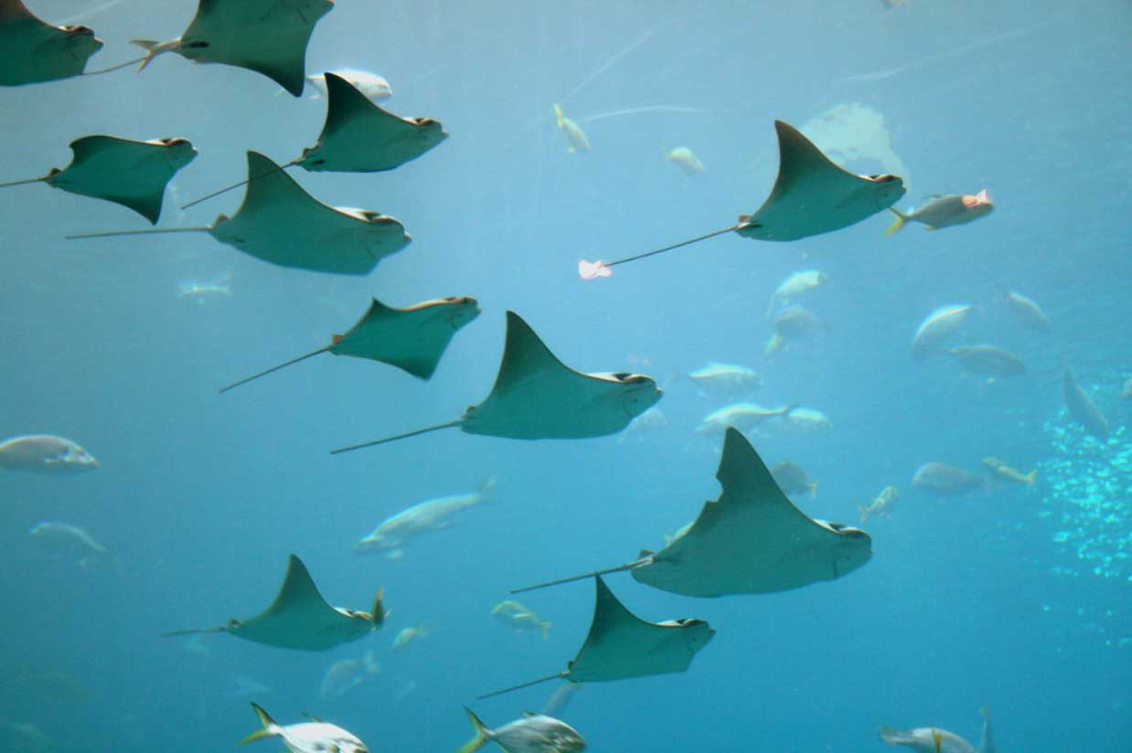 sting rays, nature's inspiration for culture building at companies